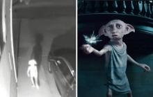 Video viral: La misteriosa y escalofriante criatura que parece Dobby, el elfo de Harry Potter